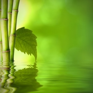 Bamboo and water photo